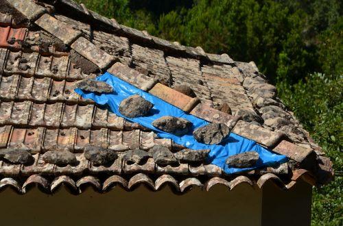 pataisytas,stogas,plyta,stogai,židinys,kaminas,stogo dengtuvai,padengtas,darbas,amatų