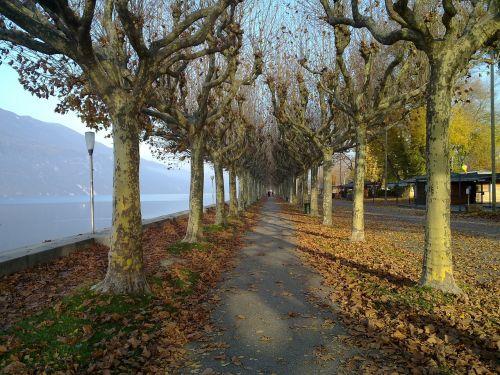kelias,Promenada,gamta