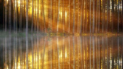 modelis,fonas,miškas,tekstūra,blizgantis,veidrodis,atspindys,vanduo,ežeras,mirgėjimas,rūkas,rūkas,migla,rytas,medžiai,šviesa,spinduliai,šviesos spindulys,saulės spindulys