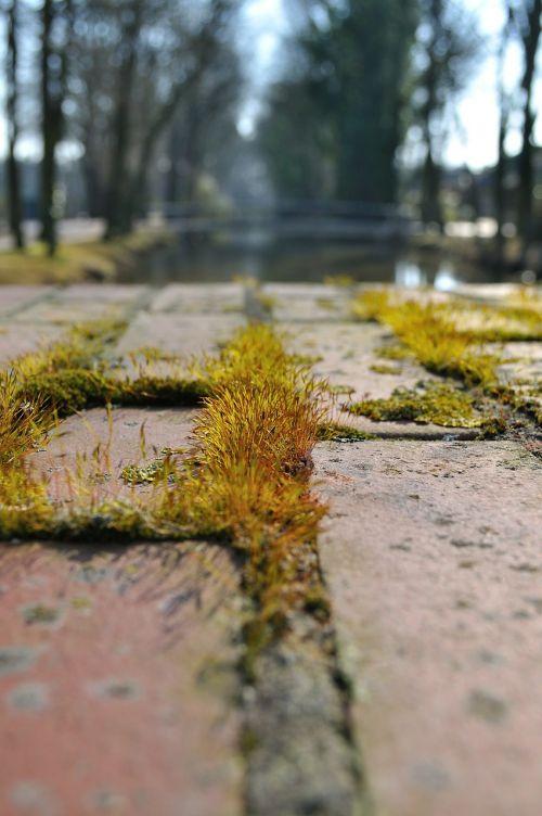 asfaltuotas,toli,samanos,žolių puokštės,užteršimas