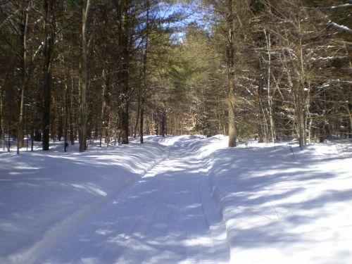 žiema, kraštovaizdis, sezonas, sniegas, miškas, medis, kelias, takas, kraštovaizdžio žiemos