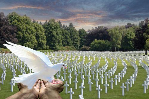 taikos balandis,baltas balandis,kapinės,nukritę kareiviai,paminklas,balandis rankose,balandis leisk leisti,simbolis,viltis,tylus,paminėti,karas,taikus,atmintis,kryžiai,kapai