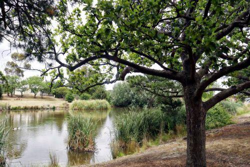 ežeras, australia, medžiai, gamta, vanduo, ramybė, taikus, taikaus ežero scenos