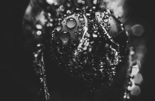 perlas,purslų,juoda ir balta fotografija,šlapias,burbulas,lašas vandens,juoda ir balta,lašeliai,makro,skristi,gyvūnas,gamta,juoda balta,karoliukas,liūtys,lietus,fonas,juodos ir baltos spalvos įrašymas,juoda