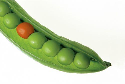 žirniai,pod,žirnių pudo,žalias,šviežias,skirtingos,išsiskirti,keistas,kontrastas,praleisti,susidūrimas,priešingas,daržovių,maistas,augalas,prinokę,pasėlių,dieta,derlius,valgymas,mityba,natūralus,ingredientas,neteisingai,nepriklausyti,individualus,individualumas,vienas,vienas,izoliuotas,vienas,vienas iš šių dalykų