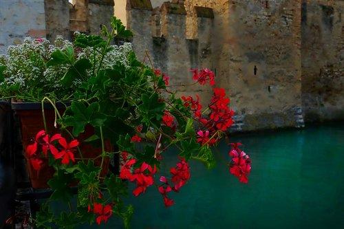 pelargonija, raudona, balkonas augalas, žiedas, žydi, balkonas, griovys, vakaro šviesa
