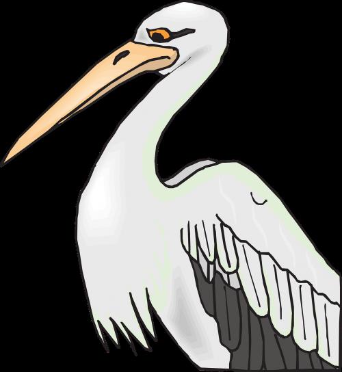 pelican,paukštis,pilka,balta,ilgai,snapas,sąskaitą,didelis,laukinė gamta,gerklės maišelis,plunksnos,sparnai,vandens paukščiai,vienas,vienas,vienas,nemokama vektorinė grafika
