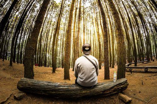 žmonės,vyras,laukimas,vienas,mąstymas,stendas,gamta,medžiai,augalas,mediena,dangus,saulėlydis,saulės šviesa