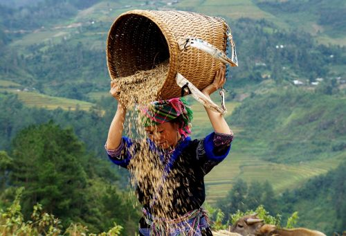 žmonės,tauta,gyvenimas,Vietnamas