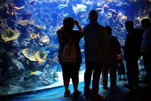 akvariumas, vandens, spalvinga, linksma, patalpose, patalpose, viduje, jūrų, žmonės, spektaklis, siluetai, turistai, žuvis, rezervuaras, korpusas, akvariumo viduje esantys žmonės