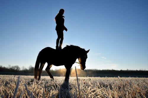 žmogus ant arklio,arklys,Reiter,žmogus,siluetas,žiema,prinokę