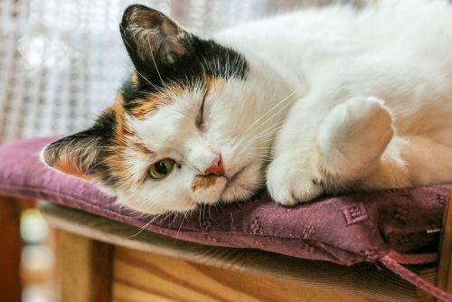 naminis gyvūnėlis,katė,gyvūnai,katės akys,naminis katinas,mielas
