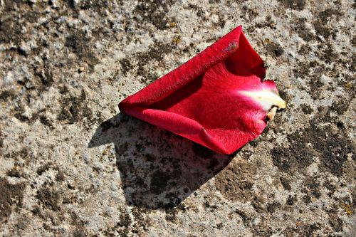 žiedlapis,raudona,rosa,gėlė,natiurmortas,saulėlydis,makro,negyvas gėlių,atspalvis,sausas žiedlapis,dirvožemis