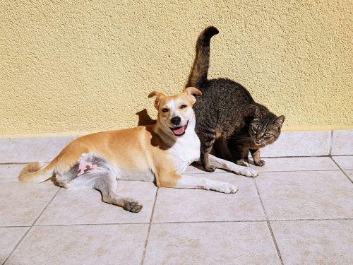 augintiniai,katė,šuo,Draugystė,gyvūnai