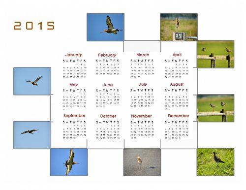 2015 m., kalendorius, planuotojas, apdaila, metai, mėnuo, mėnesių, duomenys, nuotrauka, paukštis, godwit, 2015 kalendoriaus nuotraukų kalendorius