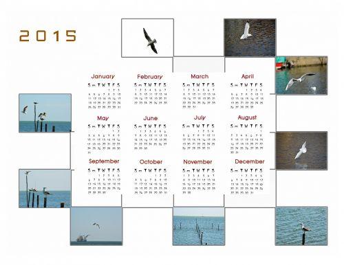 2015 m., kalendorius, planuotojas, apdaila, metai, mėnuo, mėnesių, duomenys, nuotrauka, paukštis, kepuraitė, 2015 kalendoriaus nuotraukų kalendorius