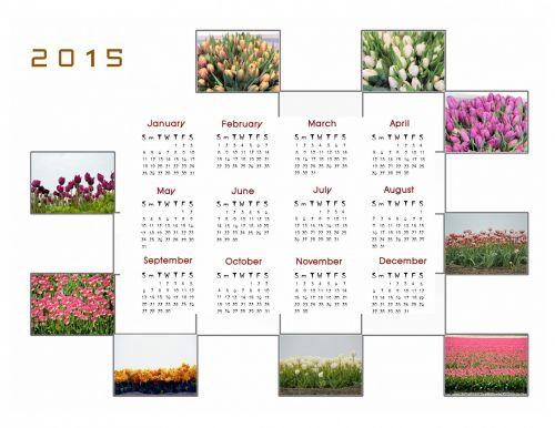 2015 m., kalendorius, planuotojas, apdaila, metai, mėnuo, mėnesių, duomenys, nuotrauka, gėlės, tulpės, 2015 kalendoriaus nuotraukų kalendorius