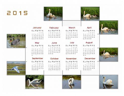 2015 m., kalendorius, planuotojas, apdaila, metai, mėnuo, mėnesių, duomenys, nuotrauka, paukštis, gulbė, 2015 kalendoriaus nuotraukų kalendorius