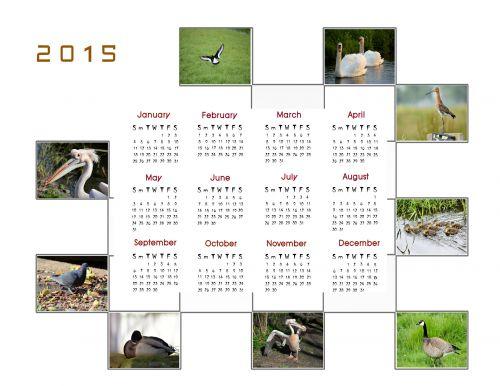 2015 m., kalendorius, planuotojas, apdaila, metai, mėnuo, mėnesių, duomenys, didelis, papildomai, paukščiai, nuotrauka, 2015 kalendoriaus nuotraukų kalendorius