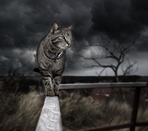 manipuliavimas nuotraukomis,katė,Photoshop,tvarkymas,kačių,audra,debesys,Debesuota diena,gyvūnai,art photoshop,skaitmeninė manipuliacija,skaitmeninis menas,tapetai,pilka,juoda,manipuliuojamas menas,Photoshop dizainas,individualus dizainas