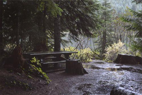 pikniko stalas,lietus,šlapias,medžiai,purvas,purvas,gamta