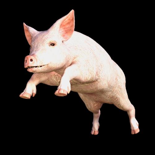 kiaulė,gyvūnas,sėti,laiminga kiaulė,naminė kiaulė,gamta,paršelis,miniatiūrinė kiaulė,kiaulės,kiaulės uodega,kiaulių figūrėlė,šlaito konstrukcija kiaulė,gyvuliai,Žemdirbystė,ūkis