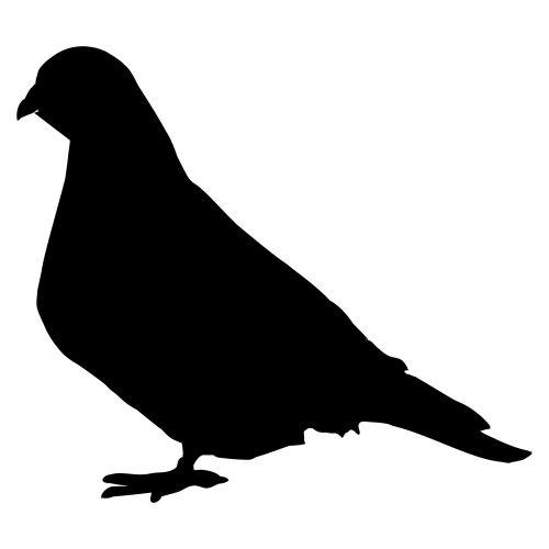 siluetas, balandis, ženklas, piktograma, balandis, izoliuotas, sparnai, alegorija, plunksnos, balta, paukščiai, uodega, gyvūnai, taika, nekaltumas, laisvė, piešimas, flock, juoda, kelia, dvasingumas, religinis, roko-balandis, iliustracija, viltis, dizainas, Laisvas, klipas, balandis