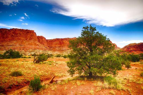 uolos, susivienijimai, geologija, natūralus, gamta, oranžinė, rifas, akmenys, pietvakarius, audra, Utah, dykuma, pušies medis Utah dykumoje