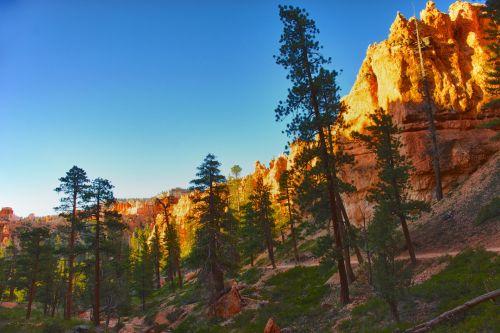 sausas, riedulys, Bryce, Bryce & nbsp, kanjonas, Bryce & nbsp, kanjonas & nbsp, nacionalinis & nbsp, parkas, kanjonas, uolos, giliai, dykuma, purvas, sausas, Gorge, aukštas, hoodoo, karštas, nacionalinis & nbsp, parkas, oranžinė, kelias, piko, pušis, Rokas, smėlis, ruožas, aukštas, medis, Utah, sienos, zion, pušynai virš pėsčiųjų tako