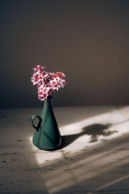 rožinis,gėlė,žiedlapiai,vazos,rodyti,augalas,gamta,stalas,saulėtas