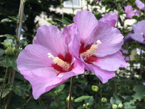 rožinis,įsakymas,vardas nežinomas