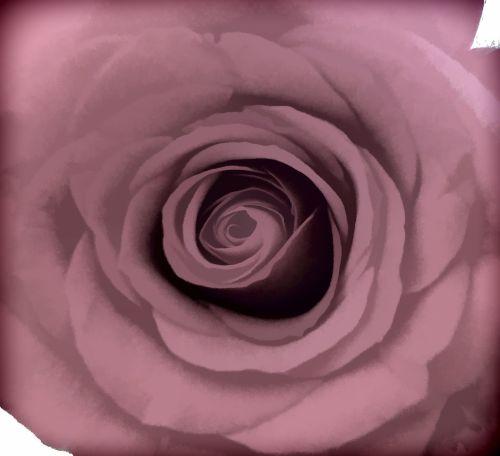 rožė, dizainas, gėlė, Iš arti, cirkuliacinis & nbsp, modelis, fonas, rožinis, rožinis rožinis dizaino fonas