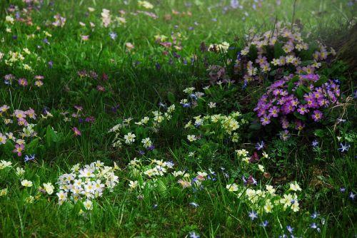 augalas, gamta, žolė, pieva, sodas, pavasaris, gėlės, augimas, botanika, žalias, žydėti, vasaros pieva, skubėti, žalia žolė, fonas, žaliųjų atspalvių, žolės, žole pieva, sultingas, be honoraro mokesčio