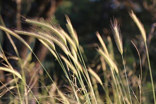 augalų, spiglys, purvo, gamta