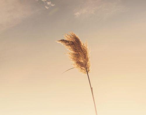 augalas,dangus,saulėlydis,gamta,kraštovaizdis,vasara,pavasaris,sezonas,aplinka,žolė,laukas,žemė,saulės šviesa,diena,lauke,debesis,kaimas