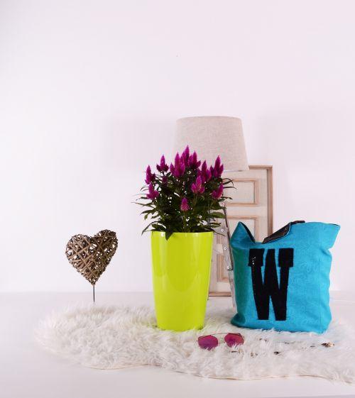 augalai,gėlių vazonai,žalias,augti,sodininkystė,puodą,spalva,spalvinga,mielas,gėlė,ruduo,patalpose,interjeras,apdaila,dekoruoti,žiedas,namas,namai,gražus,laimingas,šviežias,puokštė,diena,patalpose,sodas,sodo centras