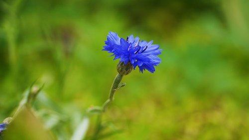 augalai, pobūdį, lapų, vasara, Iš pobūdį, Korėja, Šis tipas, gėlės, Žiedlapis, gražus
