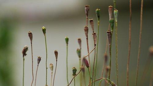 augalai, žalumos, pobūdį, lapų, žalias, vasara, servetėlės, Iš pobūdį, Korėja, Šis tipas