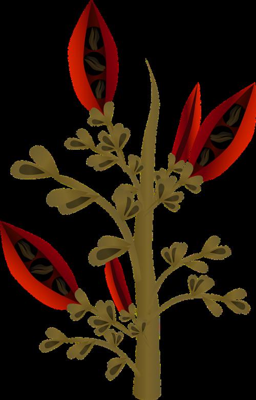 augalai,medžiai,flora,raudona,sėklos,vaisiai,filialai,gamta,sodai,pasėliai,egzotiškas,spalvinga,natūralus,nemokama vektorinė grafika