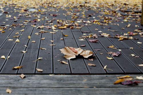 plata one,ruduo,lapai,geltona,lapai,lapai,mediena,gamta,Baklažanas,rudens lapai,šviesa,mokykla,parkas,Korėjos Respublika