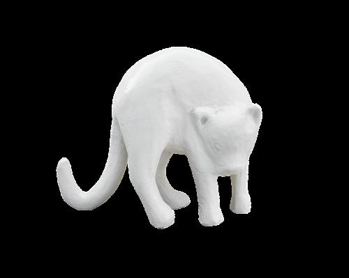 png,katė,tinkas,balta katė,balta spalva,balta