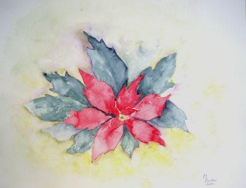 Poinsettia,gėlė,augalas,dažymas,vaizdas,menas,dažyti,spalva,meniškai,paveikslų tapyba,menininkai,kompozicija,kūrybiškumas,meno kūriniai,amatų,drobė,dailininkas,kilniai,grafinis