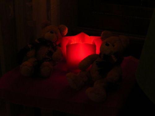 Poinsettia,šviesa,raudona,švytėjimas,meškiukai,tamsi,niūrus,mįslingas