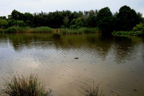 šventykla, parkas, paukštis, tvenkinys, vanduo, medžiai, austin roberts paukščių parko tvenkinys