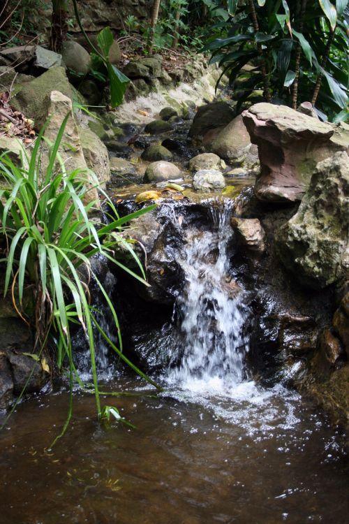 tvenkinys, vanduo, kaskados, akmenys, augalai, tvenkinys su kriokliu