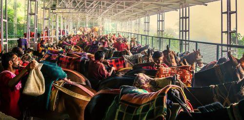 ponis,ponių grupė,arkliai,gyvūnas,stovintis,supakuoti arklį,darbinis gyvūnas,Indijos ponis,ponis ir žmonės