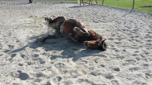 Pony, molio teismas, riedėjimo, arklys