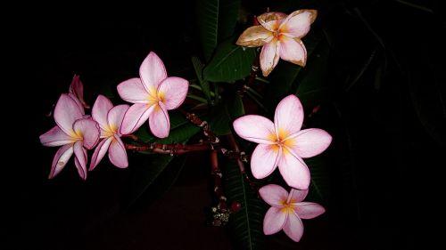 porceliano gėlė,porcelianinės gėlės,gražios gėlės,naktinis svogūnas,gėlės žydi vakare,Porceliano žiedas naktį,Porceliano gėlės rožinės spalvos,porceliano gėlė violetinė,asija,Vietnamas,vakaras,natūralus,Hanoivietnam,dvasia pirmoji savęs,pagoda,pagoda vietnam,linh tien tu pagoda,valstijos pagoda,vietnam pagoda,gėlė,naktinis gėlė,peizažas,kelionė,united su,Hoa dep,Hoa ne ve dem,s ne buoi toi,united su ve dem,united su hong,united su heart,asian,buoi toi,Thien nhien,linh tien tu,rūgštinė būsena,sour bang viet nam,united dem,Hoang Mai rajonas,hoang mai vietnam