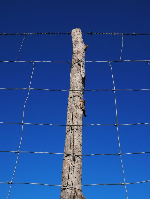 pranešimas,krūva,tvora,Wildzaun,laukinės gamtos tvora,Tinklelis,vielos tinklai,mazgų tinklai,miško dirvožemis,megzti akiniai,laukinių gėrybių,ganyklų tvora,galvijų tvora,avių tvora,avių tinklai,greitkelio tvora,šuo tvora,viela,aptvertas,metalas,saugumas,demarkacija,gynyba,riba,barjeras