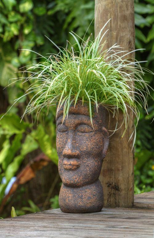 puodo galvutė,polineziečių,augalas,sodas,atogrąžų,samoa,gamta